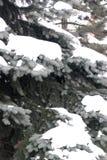 brench 4 снежное Стоковое Изображение