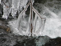 Brench na zamarzniętej wodzie Zdjęcie Stock