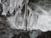 Brench op een bevroren water Stock Foto