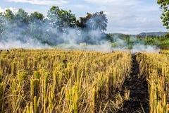 Brennen des brennenden Strohs der Reisstoppel in den Reislandwirten in Thailan Lizenzfreie Stockfotografie
