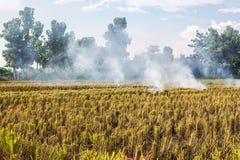 Brennen des brennenden Strohs der Reisstoppel in den Reislandwirten in Thailan Lizenzfreie Stockbilder