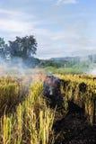 Brennen des brennenden Strohs der Reisstoppel in den Reislandwirten in Thailan Lizenzfreies Stockfoto