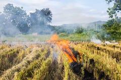 Brennen des brennenden Strohs der Reisstoppel in den Reislandwirten in Thailan Stockfotos