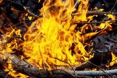 Brennen des dünnen trockenen Grases während des brandstiftenden Feuers, Nahaufnahme Lizenzfreies Stockbild