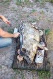 Brennen eines Hausschweins vor dem Schnitt Abbau des Schweinhaares Lizenzfreie Stockbilder