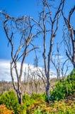 Brennen Sie unten Wald, La Gomera Stockfotografie