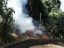 Brennende Blätter in den Tropen stock footage