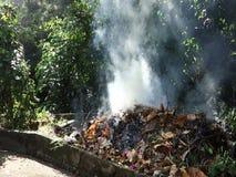 Brennende Blätter in den Tropen stock video