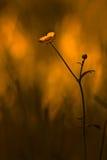 Brennende Blume Lizenzfreie Stockfotografie