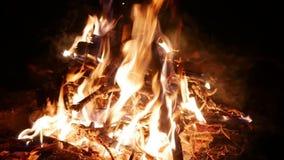 Brennende Flamme auf Lagerfeuer nachts im Wald stock video footage