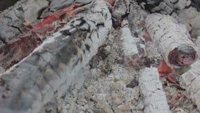 Brennende Holzkohle stock video