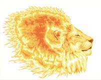 Brennende Mähne des Löwes Stockfoto