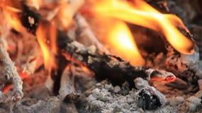 Brennende Niederlassungen stock video