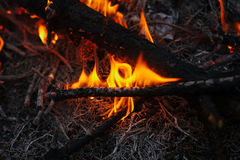 In brennenden Niederlassungen und in den Bäumen eines KiefernWaldbrands Stockfotos