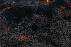 In brennenden Niederlassungen und in den Bäumen eines KiefernWaldbrands Stockbild