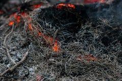 In brennenden Niederlassungen und in den Bäumen eines KiefernWaldbrands Lizenzfreie Stockfotografie