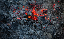 In brennenden Niederlassungen und in den Bäumen eines KiefernWaldbrands Stockbilder