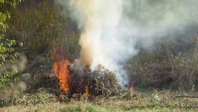 Brennender Herbstlaub stock video