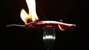 Brennender Pfeffer des roten Paprikas auf einer Gabel stock video footage