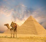 Brennender Sonnenuntergang-Ägypten-Pyramiden-Kamel-Vordergrund H stockfoto