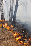 Brennender Wald Stockbild