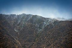 Brennender Wald Lizenzfreie Stockfotografie