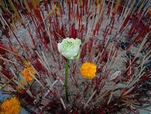 Brennender Weihrauch und Kerze nahe vielen Opfer und Blume an Stockfoto