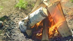 Brennendes Brennholz auf Feuer stock video