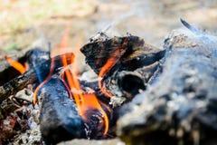 Brennendes Brennholz feuer Feuer, Asche Stockbild
