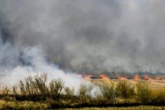 Brennendes Feld lizenzfreies stockfoto