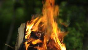 Brennendes Feuer draußen stock video footage