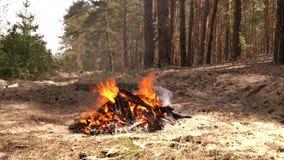 Brennendes Feuer in einem Kiefernwald stock video footage
