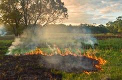 Brennendes Gras Stockbilder