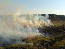 Brennendes Gras. Lizenzfreie Stockbilder