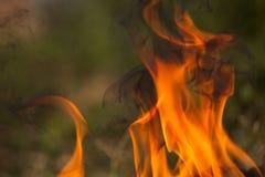 Brennendes Holz und Flammen lizenzfreie stockfotos