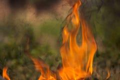 Brennendes Holz und Flammen stockfotos
