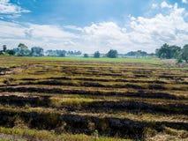 Brennendes Stroh in der Ursache der Reisplantage eine zur globalen Erwärmung lizenzfreie stockfotos