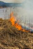 Brennendes trockenes Gras auf der Flussbank Frühling Stockbild