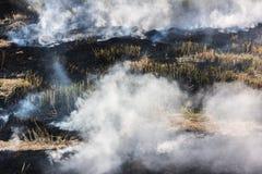 Brennendes trockenes Gras auf Feld Stockfotos