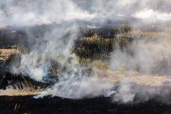 Brennendes trockenes Gras auf Feld Stockbilder