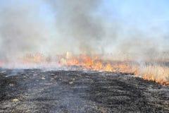 Brennendes trockenes Gras und Schilfe Stockfotos