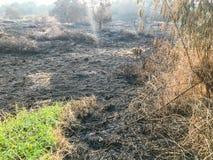 Brennendes trockenes Gras und Schilfe Lizenzfreie Stockfotos