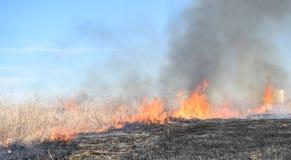 Brennendes trockenes Gras und Schilfe Lizenzfreie Stockfotografie