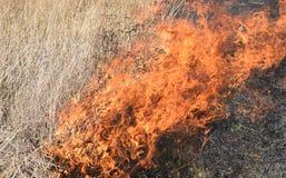 Brennendes trockenes Gras und Schilfe Stockfoto