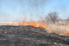 Brennendes trockenes Gras und Schilfe Stockbild