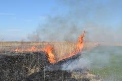 Brennendes trockenes Gras und Schilfe Stockfotografie