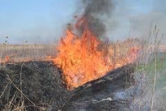 Brennendes trockenes Gras und Schilfe Lizenzfreies Stockbild