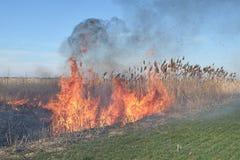 Brennendes trockenes Gras und Schilfe Lizenzfreie Stockbilder