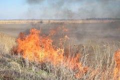 Brennendes trockenes Gras und Schilfe Lizenzfreies Stockfoto