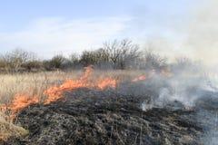 Brennendes trockenes Gras und Schilfe Säubern der Felder und der Abzugsgräben von Lizenzfreies Stockbild
